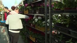 Muskátli, petúnia és fűszernövények