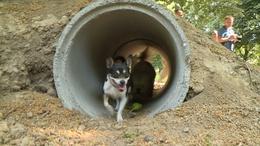Öt kutyafuttató épül Kaposváron