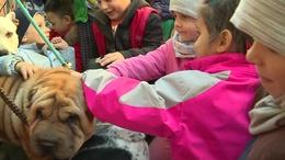 Ovisok gyűjtöttek adományokat a Kutyatár lakóinak