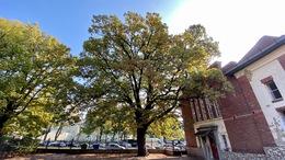Kaposvári lett az év fája!