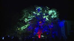 Fényfestéssel ünnepelték a szabadságfa győzelmét