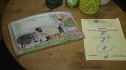 Rangos országos elismerést kapott a Kutyatár Egyesület