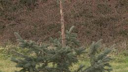 Több százezer forintos kárt okoztak a szarvasok Bőszénfán