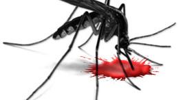 Hadjárat a vérszívók ellen