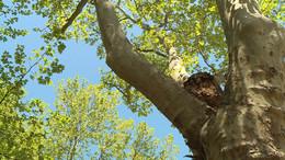Folytatódik a faültetési és famegújítási program Kaposváron
