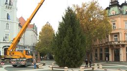 Megérkezett a Kossuth térre Kaposvár karácsonyfája