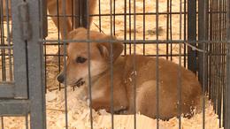 Már 200 ezren kitöltötték az állatvédelmi online felmérést