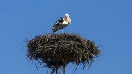 Somogyba is megérkeztek a gólyák