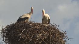 Megérkeztek Somogyba az első gólyák