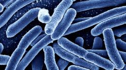 E. colival szennyezett termék kerülhetett Magyarországra