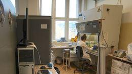 Koronavírus: így zajlik a laborban a munka
