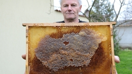 Magyarország-térképet hoztak össze a méhek
