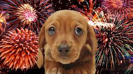 Bepánikolhatnak az állatok a tűzijátéktól