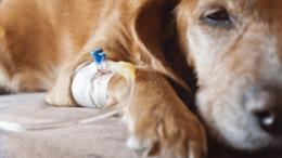 Elindult az állatorvosi ügyelet Kaposváron