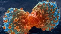 Így vennék fel a harcot a rákkal