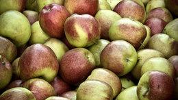 Lajstromba veszik a gyümölcsfákat