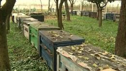 Másfél millió forint után fut 12 méhész - Videóval