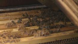 Megvan mitől hullanak a méhek