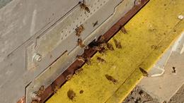 Segítség a mézkészítőknek