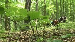 Erdőjárók vetélkedtek