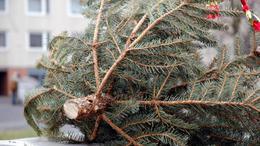 Így rakja ki a ház elé a karácsonyfáját!