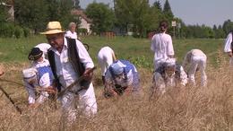 Az aratás ünnepe