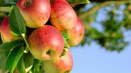 Megbosszulhatja magát az enyhe tél a gyümölcsösökben