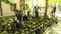 Folytatódik a virágosítás Kaposváron