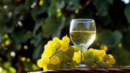 Jó lesz az idei bortermés