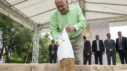 500 tonna búza gyűlt össze a Magyarok kenyere programban