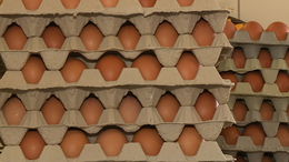 Nemzeti színű zászlót kapnak a tojások