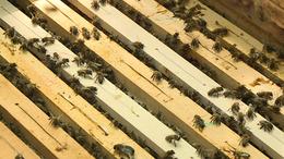 Méhészgondok