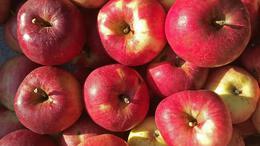 Erősen megdrágul idén az alma