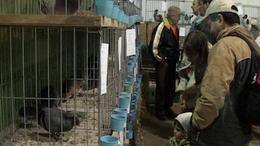 Állattartó telepek korszerűsítésére lehet pályázni