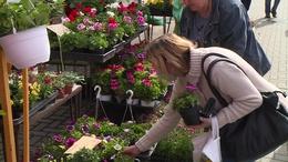 Anyák napi virágvásárt tartottak a Nagypiacon