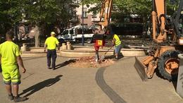 Helyükre kerültek a Noszlopy utca új fái