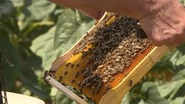 Kiváló minőségű, de kevés somogyi méz lesz idén is