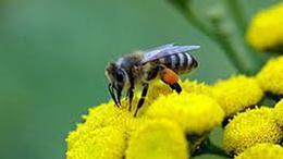 Méhésztalálkozó, a ború és a remény jegyében