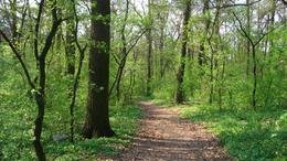 Pusztulnak az erdők
