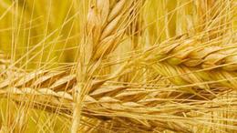 Agrár leg-ek a 2009. évben