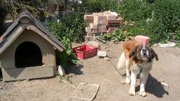 Felfüggesztett börtönt kapott a jákói állatkínzó