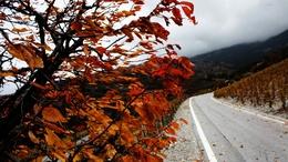 Visszatér az ősz: viharos szél és sok eső várhat ránk!