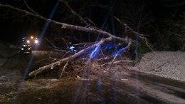 Kidőlt fákat hagyott maga után a havazás