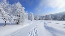 Újabb enyhe tél elé nézünk!
