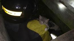 Macskamentés 20 méter mélyről