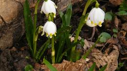 Itt a tavasz újabb jele