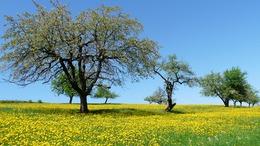 Újabb felmelegedés, kellemes tavaszi idő
