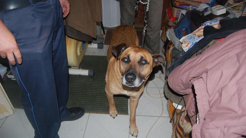Fotók: Kutyatár Egyesület