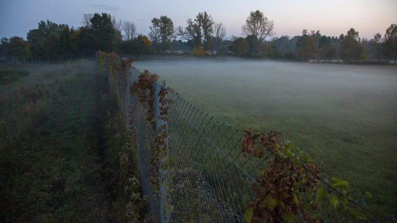 Így nézett ki a növények által benőtt ideiglenes biztonsági határzár a magyar-horvát zöldhatáron Zákány közelében 2016. október 16-án. fotó: MTI/Varga György