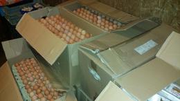 Négyezer tojást kaptak ajándékba a Kutyatárosok